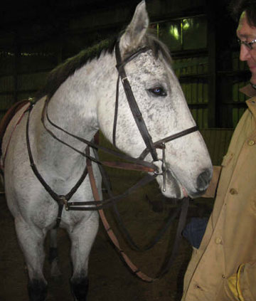 Bailey Stead's horse, Patriot, who has yet to injure her badly.