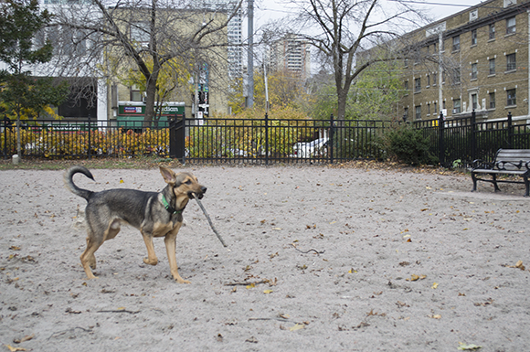 L Amoreaux Dog Park